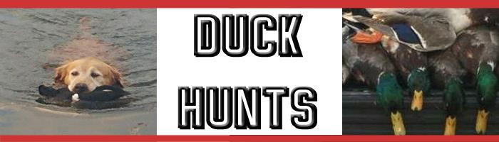 duckheader2